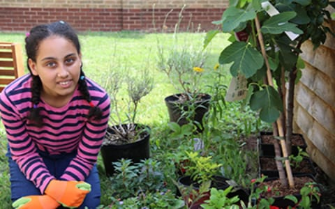 The Holgate Garden project